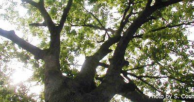 Tree Canopy Tour April 3rd