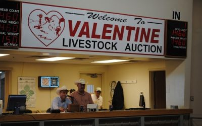 Benefit Rollover Auction Results