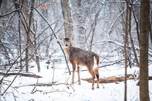 Valentine Deer Check Station Numbers