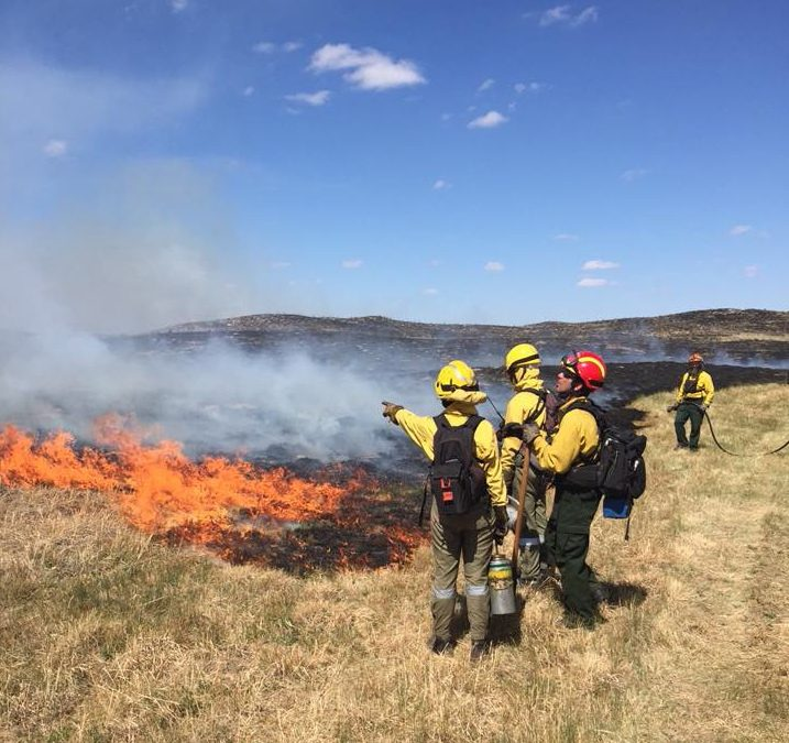 Controlled Burns in the Area