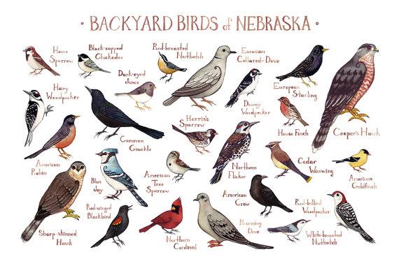 Free Evening Bird Hikes