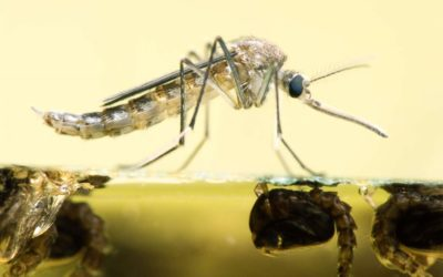 West Nile Virus Death