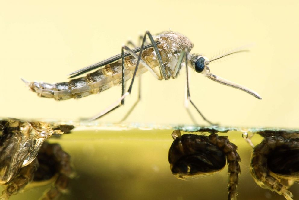 West Nile Virus Death