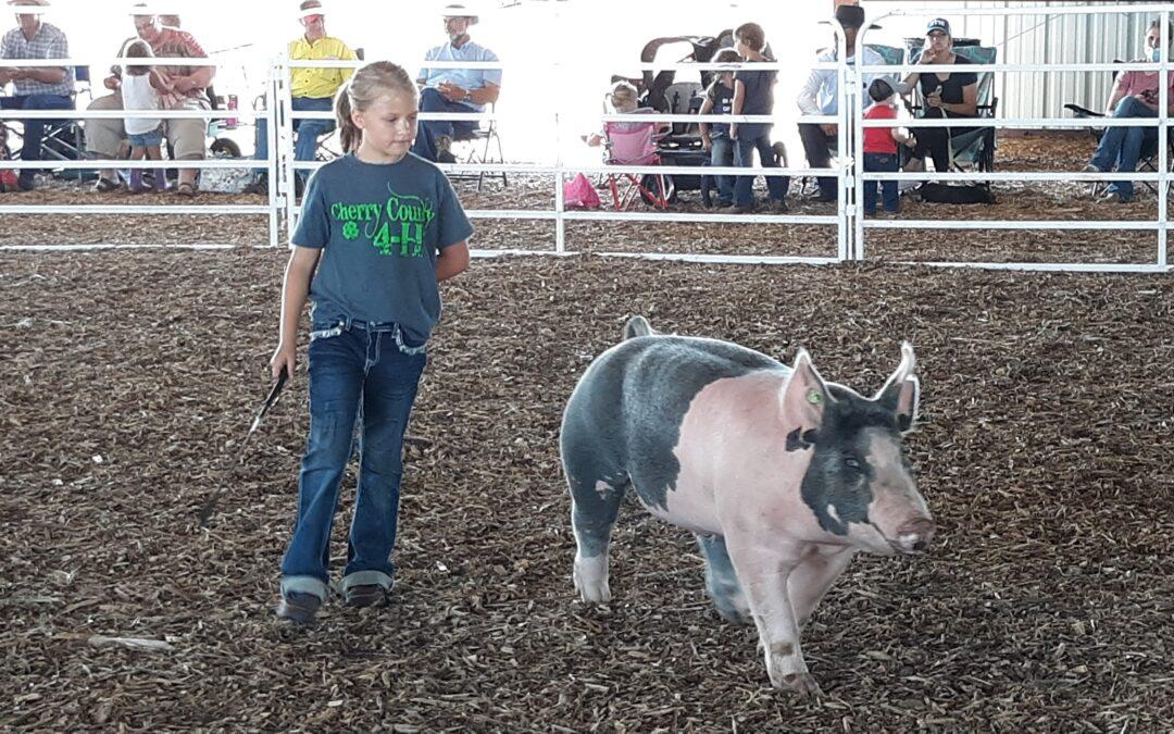 Cherry County Fair Continues