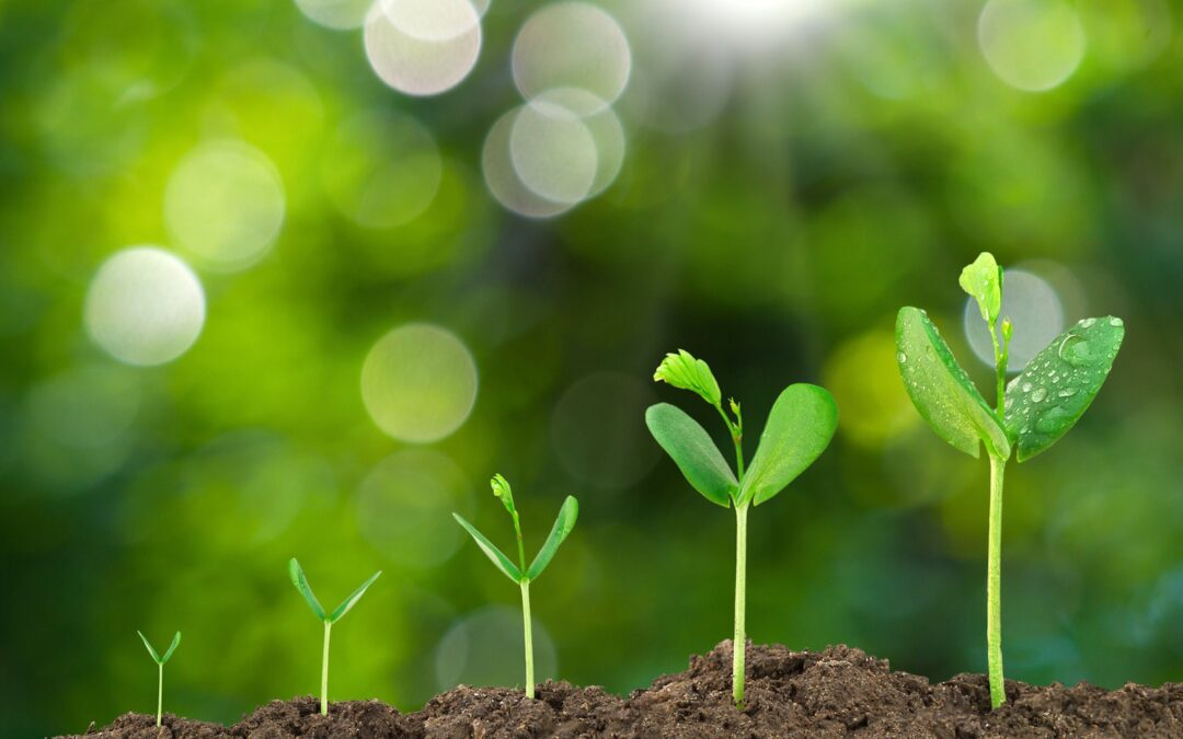 Healthy Soil Solutions Seminar